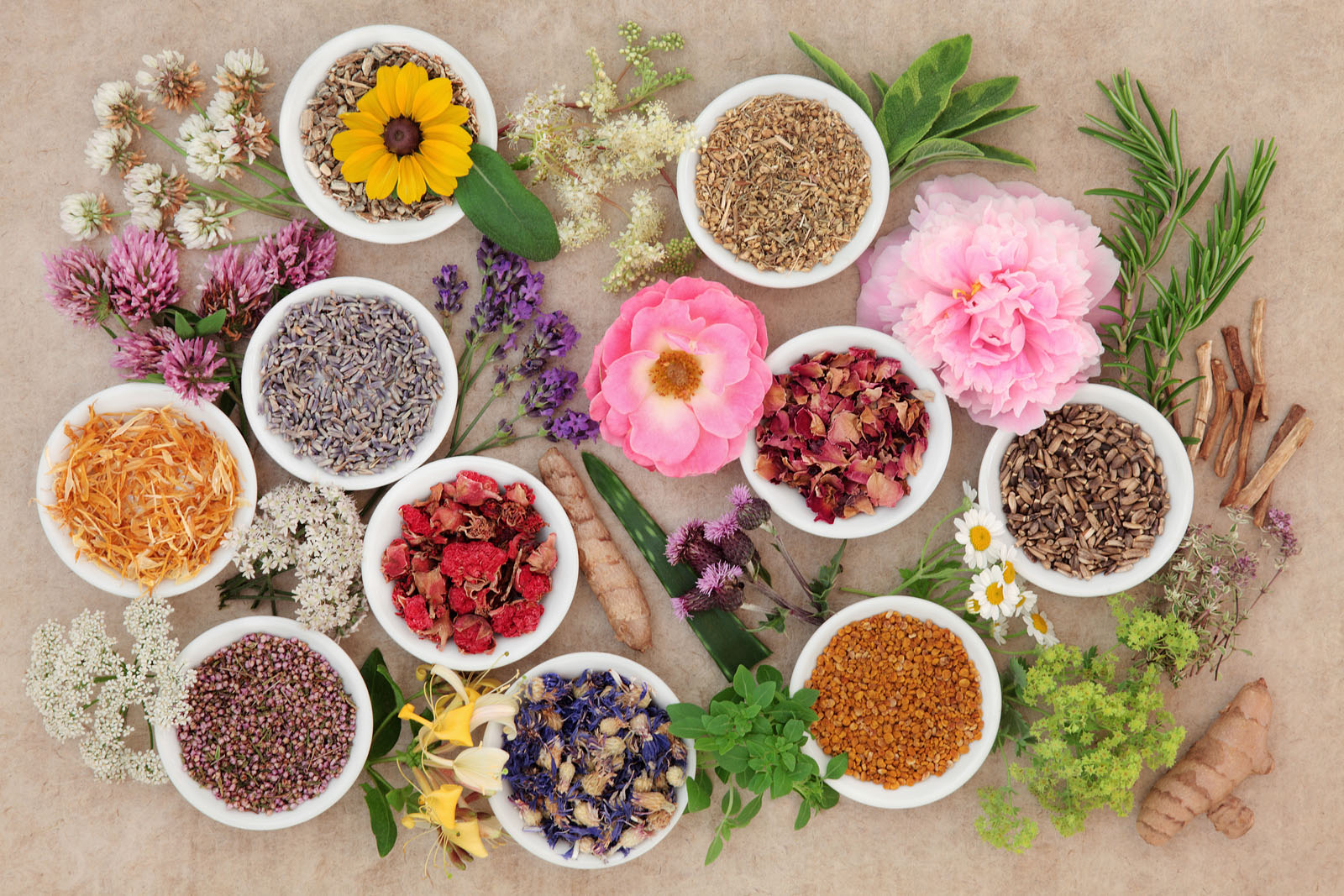 Healing herb and flower selection used in herbal medicine over handmade hemp paper background.